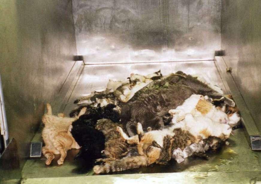 e0144012 128946 - ペットショップで売れ残った動物の最後とは?