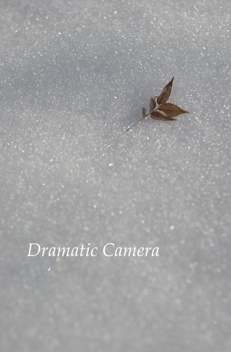 Nikon 50mm F1.8 パンケーキレンズ : ドラマチックカメラ