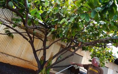 Island X Hawaii (Waialua Coffee Factory) : Manami Kea in ...