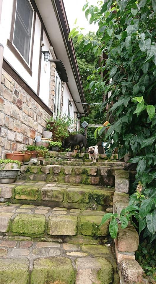 犬と泊まれるペンション モッキングバード_a0286340_11202211.jpg
