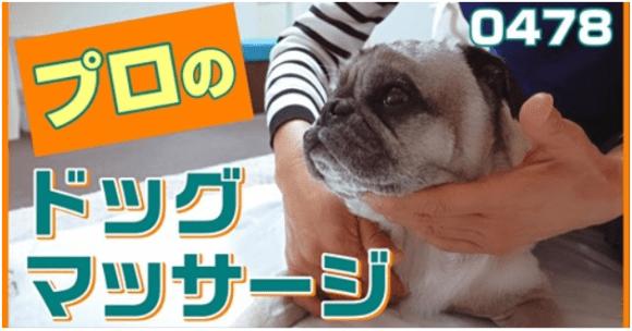 小虎君のマッサージ 動画!!_a0286340_20594952.png