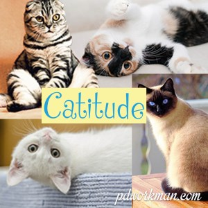 Show me your #catitude