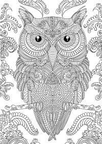 Adult coloring book: 30 owl designs and paisley patterns ...