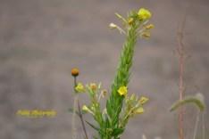 tall green yellow weed