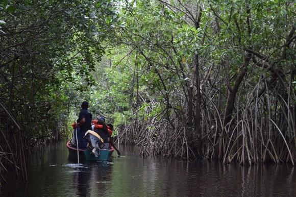 21 mangroves