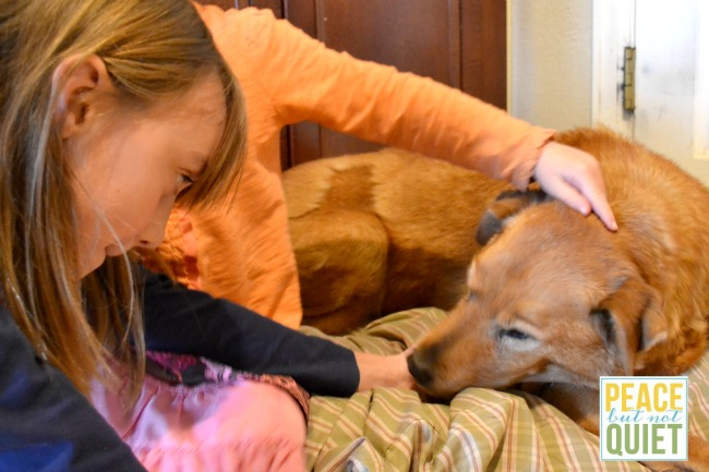We love our senior pet!