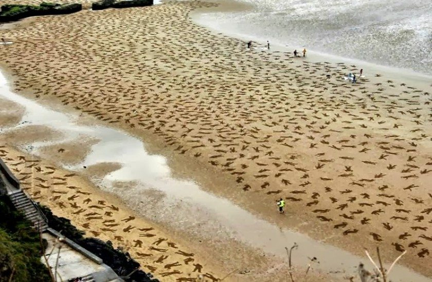 lest-we-forget-9000-silhouettes-stencilled-on-normandy-beaches-commemorating-d-day-june-6-1944-jamie-wardley-andy-moss-the-flying-tortoise-840x550