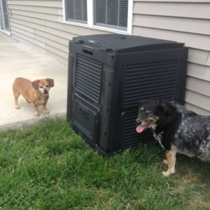 Dogs with compost bin