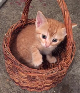 Kitten in a basket. I swear, I came home and found him like this. I've found him like this several times since.