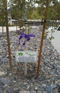purple ribbon wrapped trees