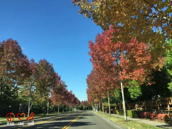 Beautiful Fall Colors - My 100 Pound Journey - Peace Love and Low Carb