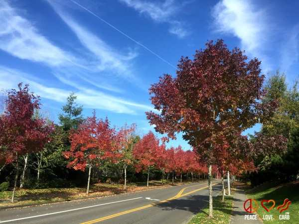 Beautiful Fall Colors - Out for a nice walk - Peace Love and Low Carb