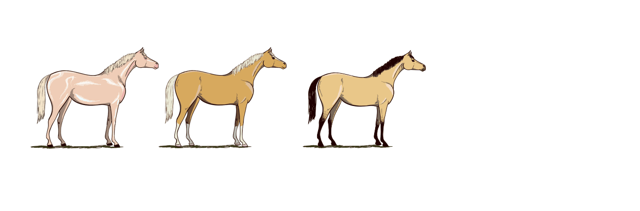pferdefarben-beige