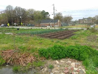 Raleigh City Farm