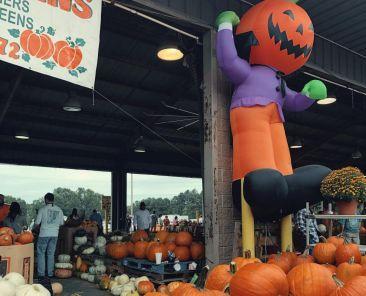 Pumpkins at the North Carolina Farmers Market