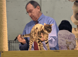 Judge looks at cat at Raleigh cat show