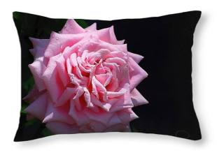 Rose - Pillow