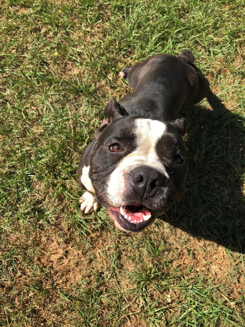 39736856 6 Jpg Peach County Animal Rescue And Rehabilitation