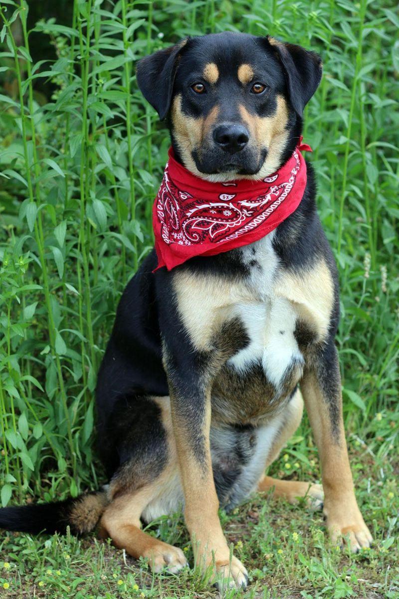 44743277 3 Jpg Peach County Animal Rescue And Rehabilitation