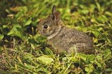 baby_wild_rabbit_1_by_michellalonde-d54j3c1