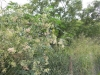Diverses Grünzeug im Park