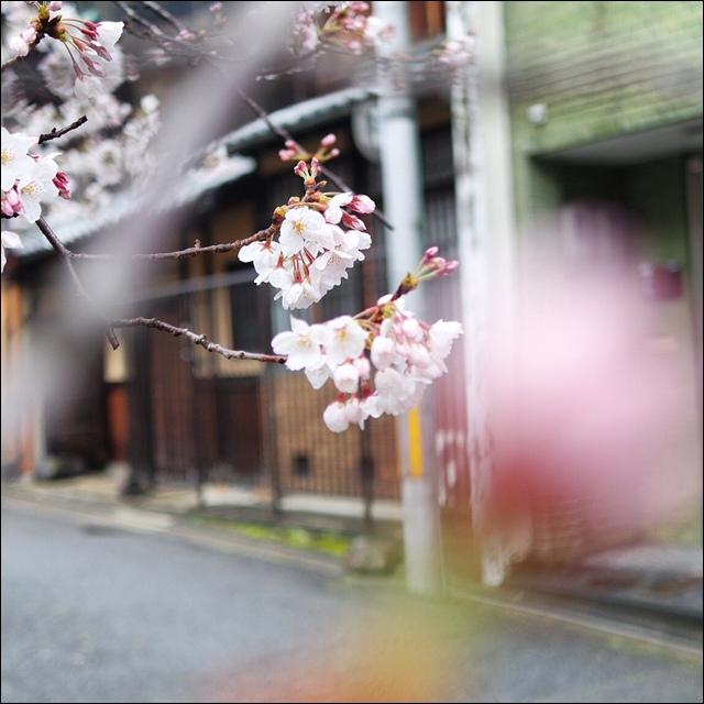 安井金比羅宮peachnote (9).JPG