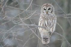 Owl be good!