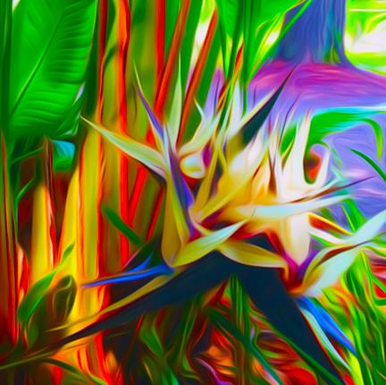 Bird of Paradise by Eileen Murphy