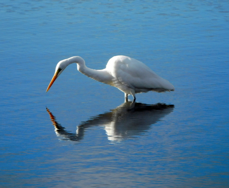 Egret by Jane Williams