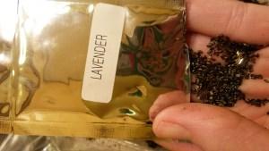 Free Lavender seeds