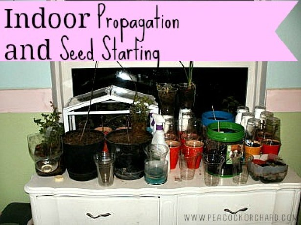 Indoor Propagation and Seed Starting