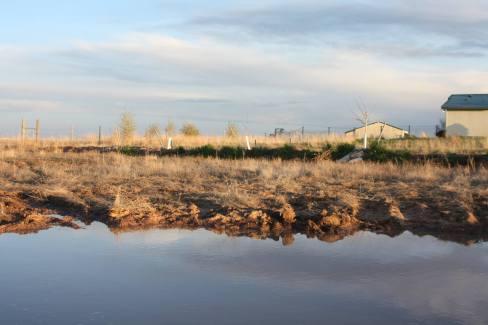 Unintentional pond sunset