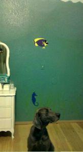 fish dog.