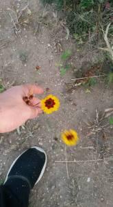 cider ocrchard flowers