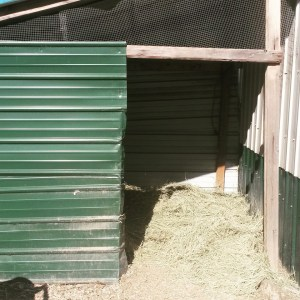 duck hut turned pig shed