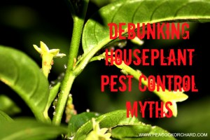 What really works to control houseplant pests?