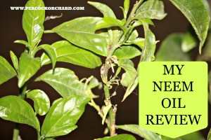 My Neem Oil Review