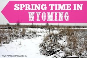 Springtime in Wyoming