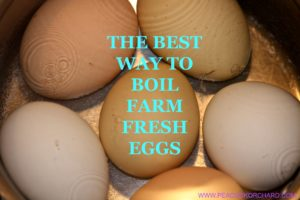 The best way to boil farm fresh eggs