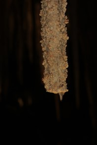 It took 85 years to grow the tiny pointy bit right at the end of this stalactite after being broken off for a souvenir