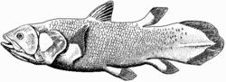 250px-Coelacanth-bgiu