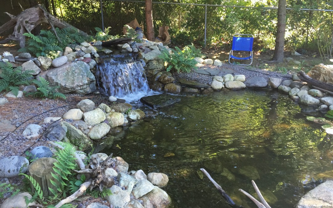 Want To Reduce Stress And Enhance Your Landscape? Install A Pond!