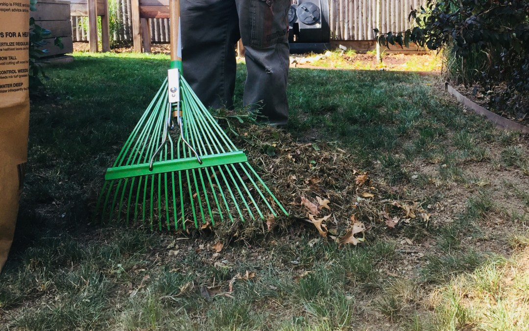 9 Reasons Why Leaf Raking Is Worth Your Time
