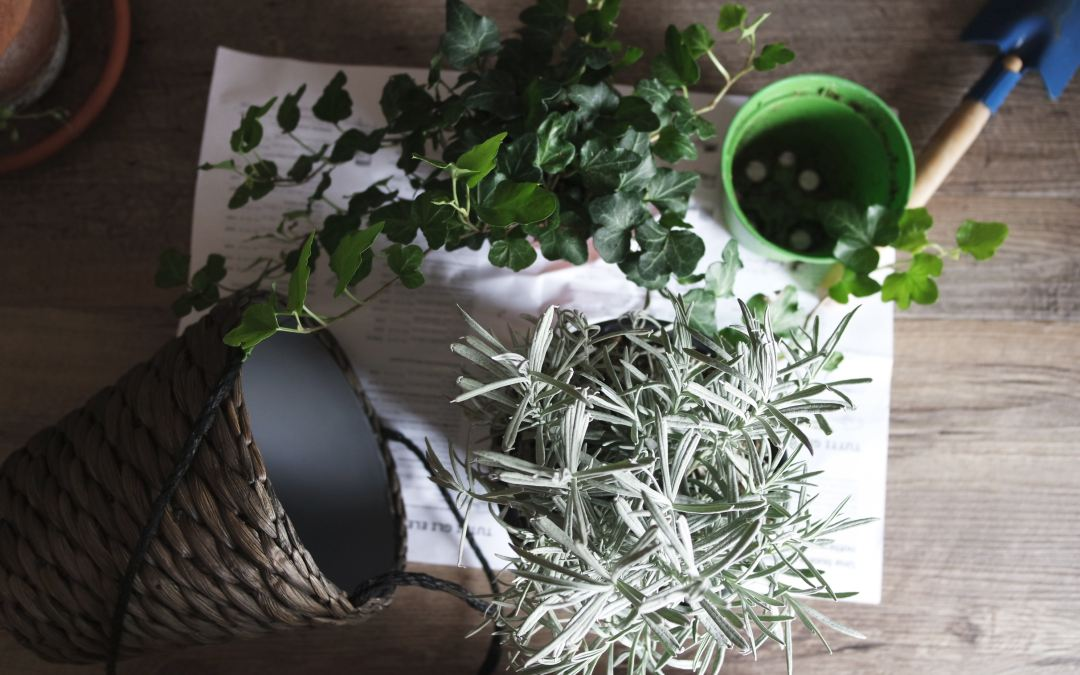 Health Benefits of Owning Houseplants