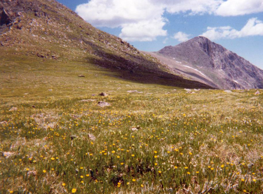 """Beautiful flowers on """"The Saddle"""".  My route ascended the slope to the left to Hagues, and then followed the skyline to Mummy on the right."""