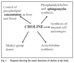 choline functions - brain nutrients