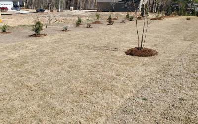 Why Winter Is A Great Time To Lay Sod