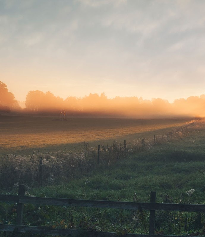 Midsummer / Liþa – The Summer Solstice