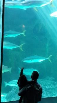 Two Oceans Aquarium - PeanutGallery247