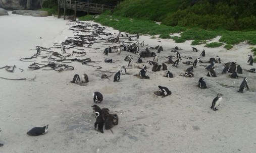 Things to do, Places to see - Boulders Beach - PeanutGallery247
